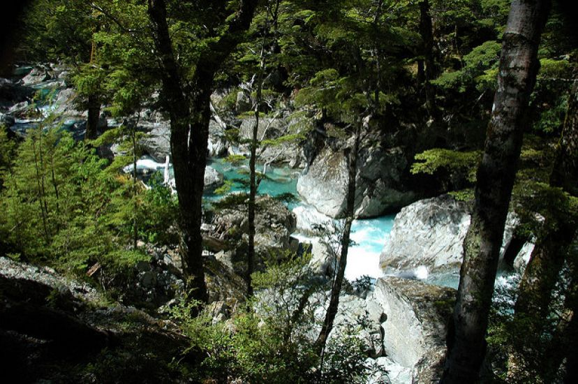 Routeburn Track Encounter Guided Day Walk